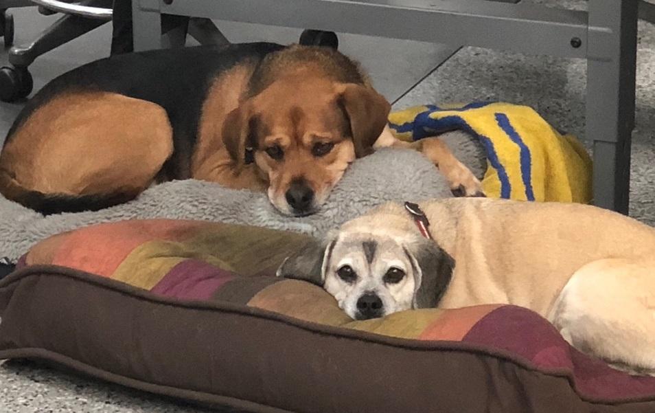 https://0201.nccdn.net/4_2/000/000/076/de9/dogs2.jpg