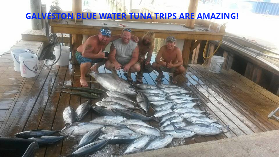 Galveston Texas Tuna Fishing