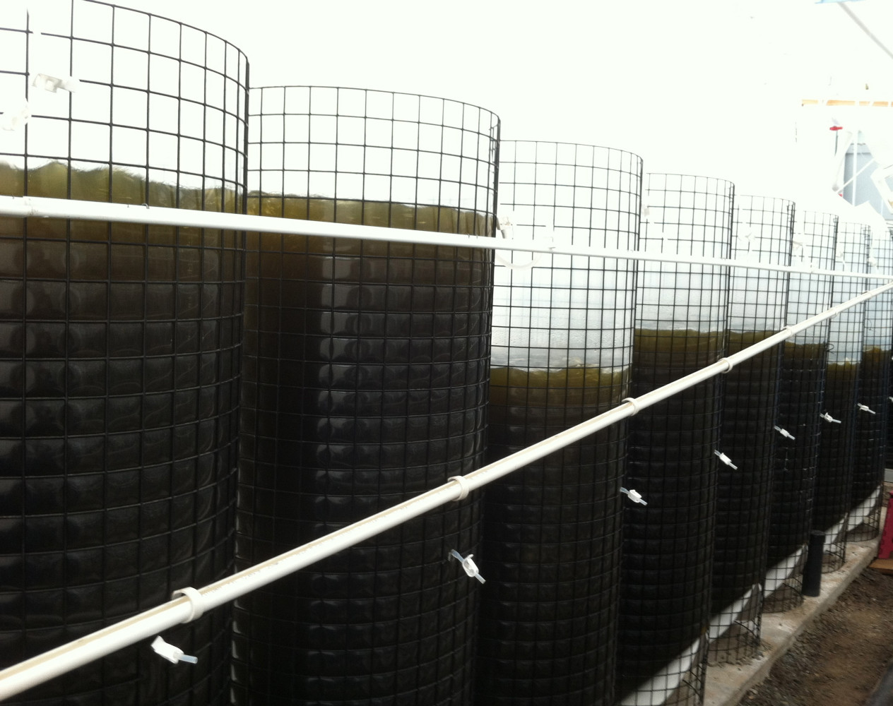 SEACAPS IS A COMPLETELY INTEGRATED SYSTEM THAT REDUCES UP TO 90% OF TRADITIONAL ALGAE CULTURE COSTS
