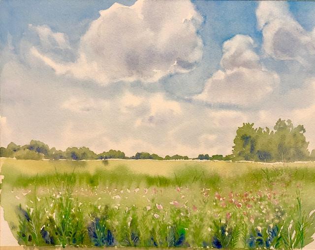 "Meadow in Urbana Watercolor 15"" X 11"" $250."