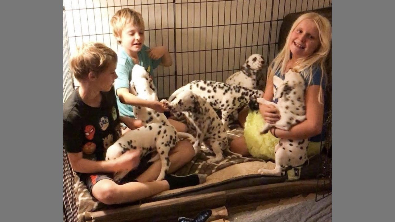 My grandkids with the pups