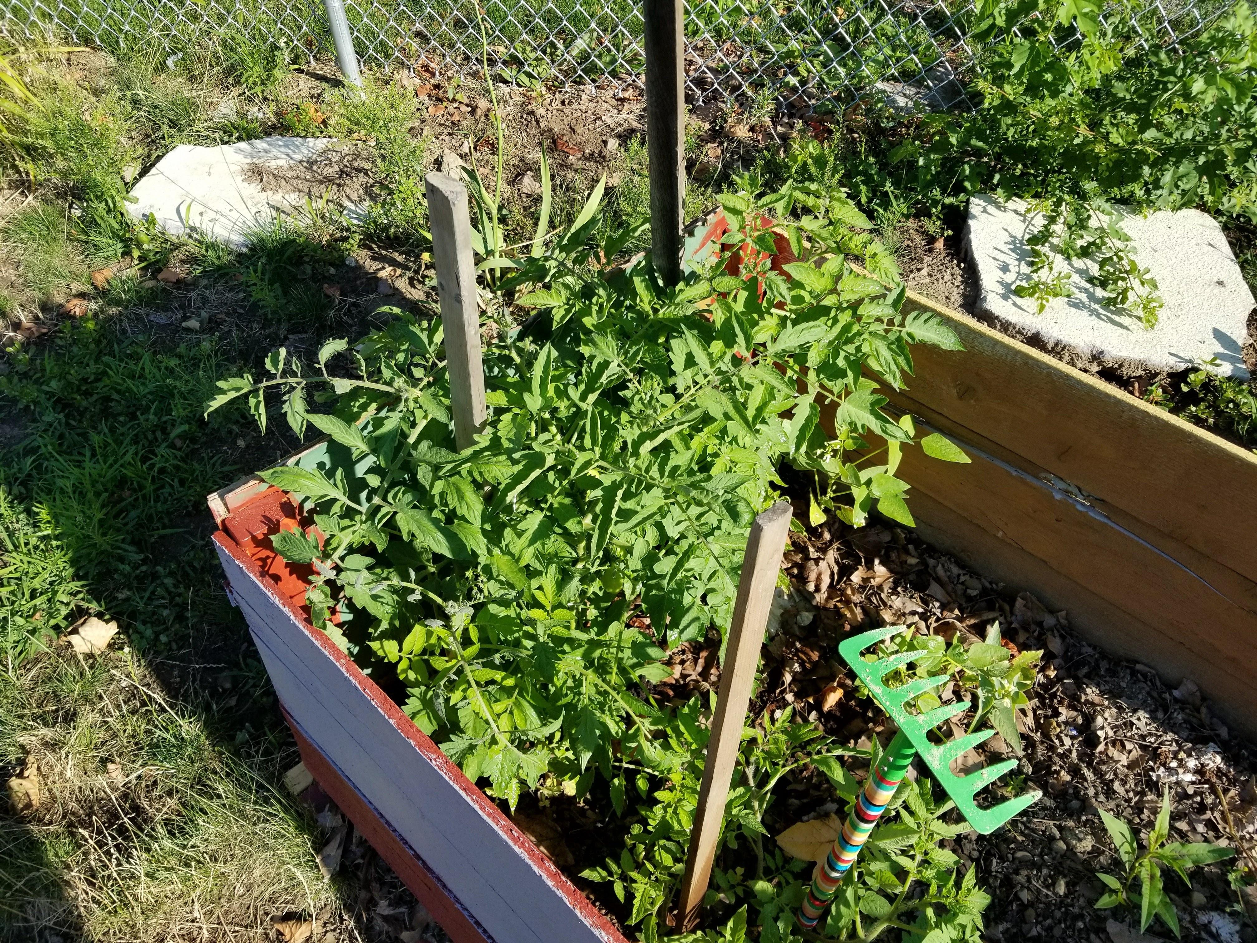 https://0201.nccdn.net/4_2/000/000/07a/dbb/tomatoes-4032x3024.jpg