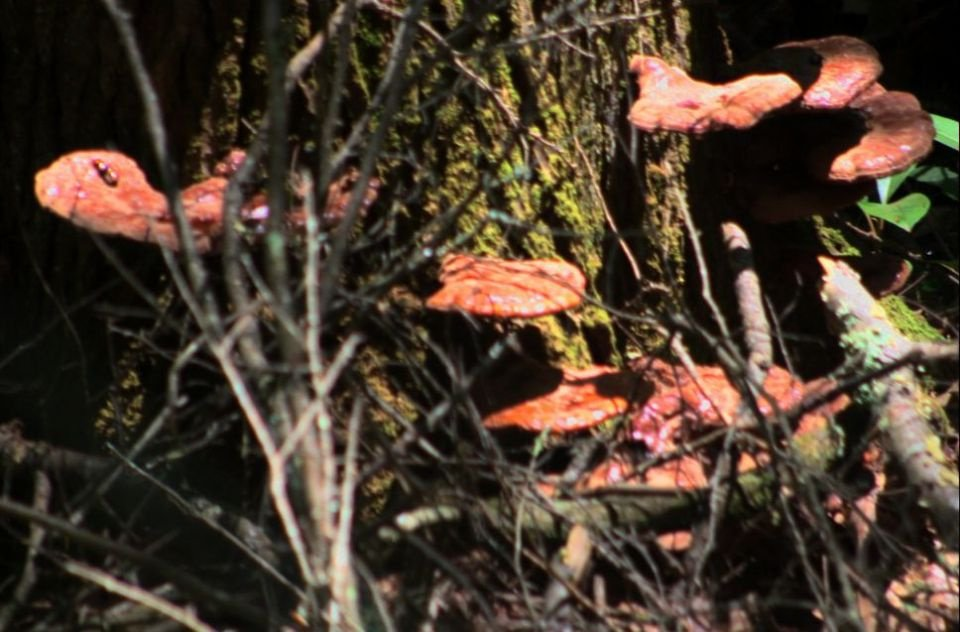 https://0201.nccdn.net/4_2/000/000/07d/95b/Fungi---32--960x632.jpg