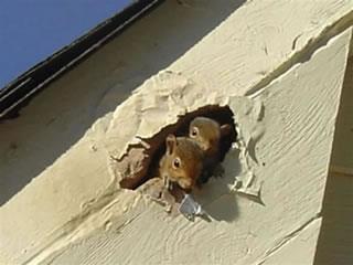 Squirrel Control Orlando Florida