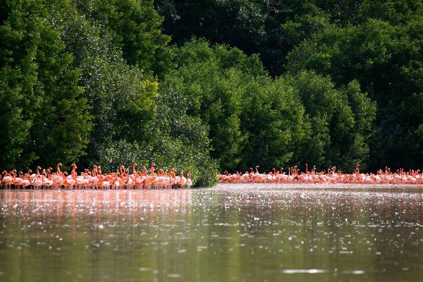 Celestún, lugar de rozagantes flamingos