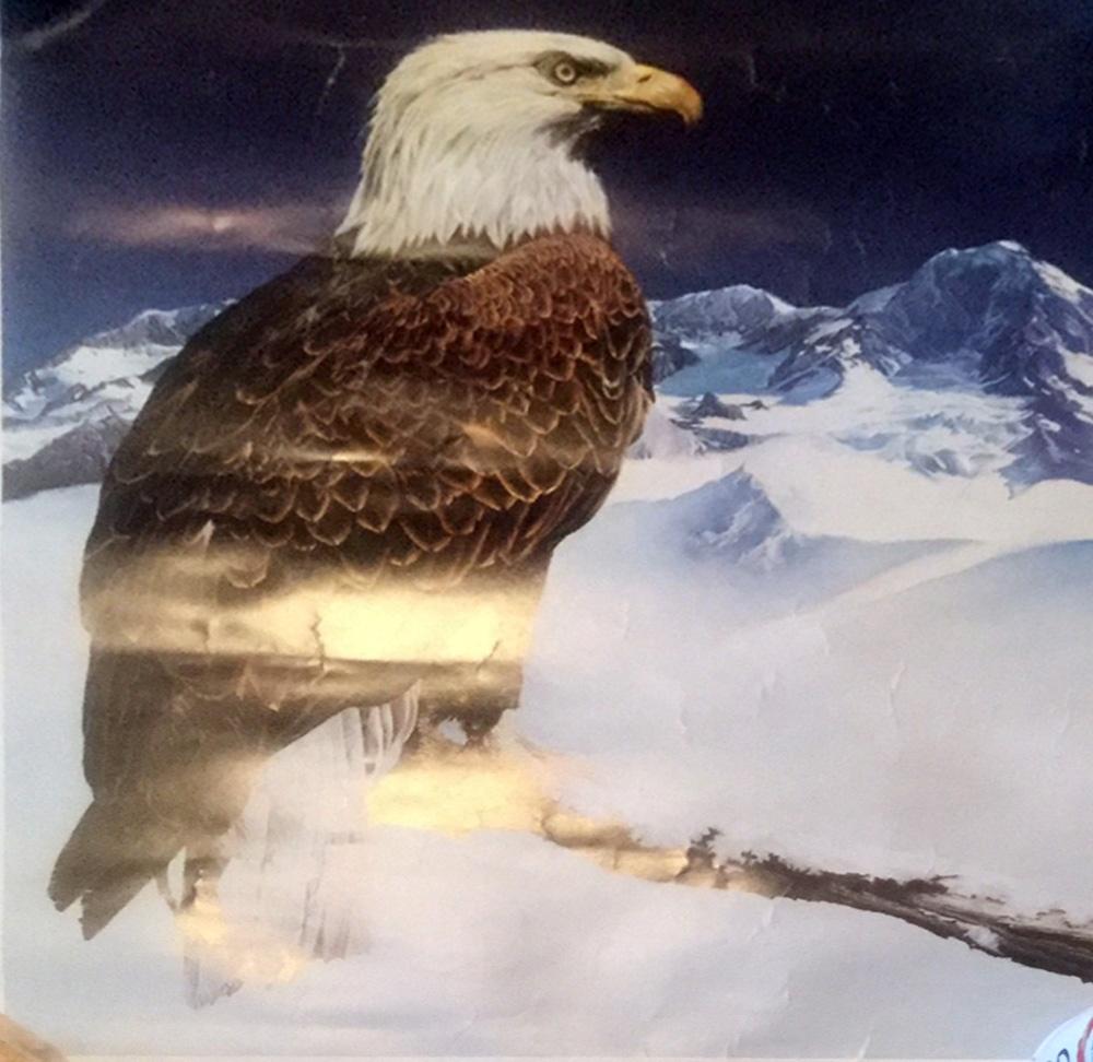 https://0201.nccdn.net/4_2/000/000/081/4ce/eagle_-1000x972.jpg
