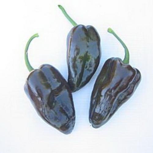 Pepper Mulato Isleno