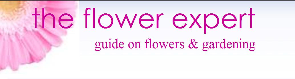 TheFlowerExpert Logo