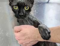 Cat Bath 1